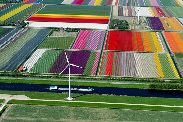 مزارع گل کشور هلند